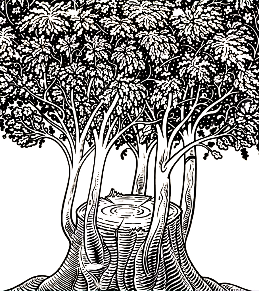 a coppice as a model for resilience; print by István Orosz