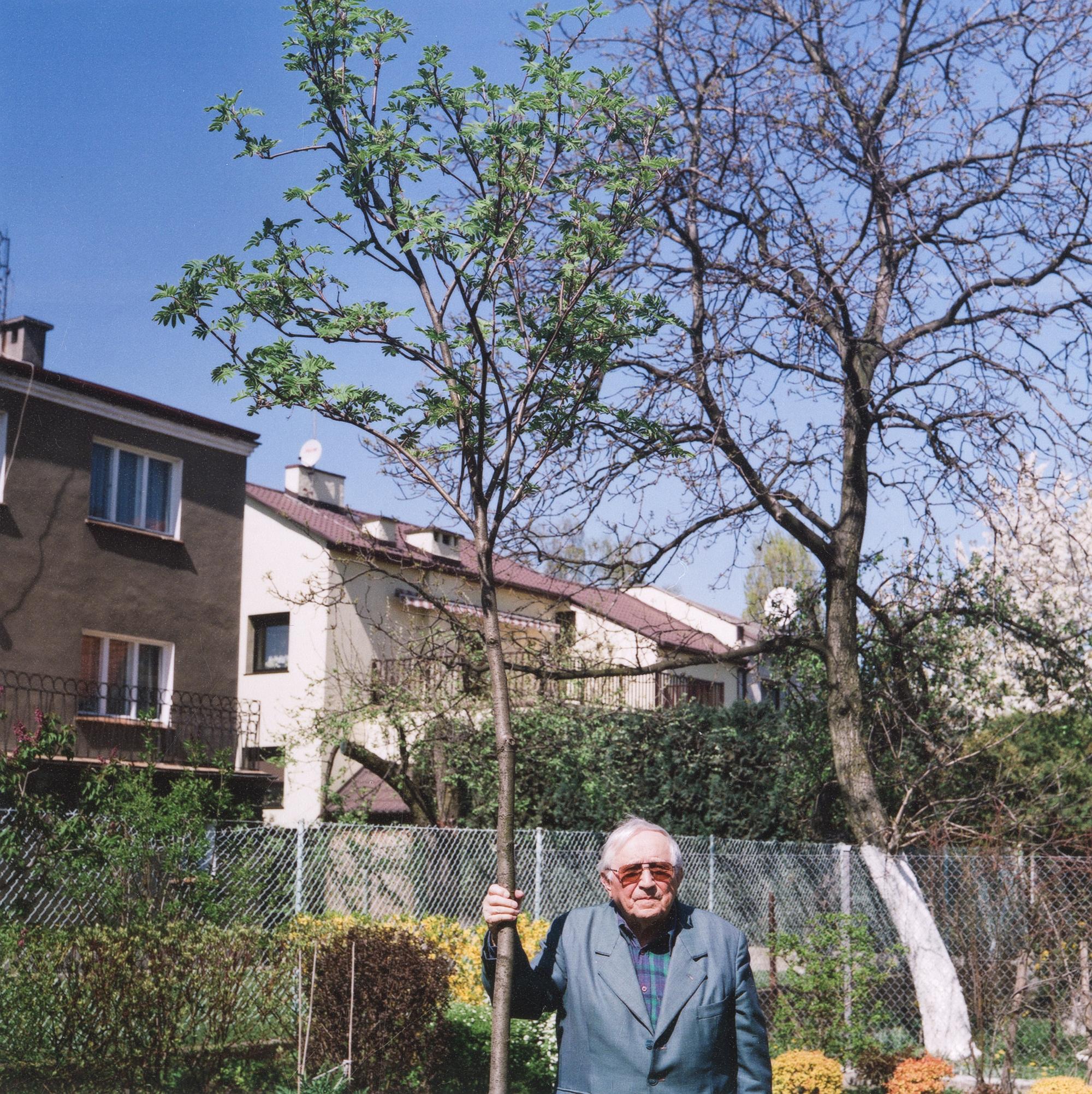 Tadeusz Różewicz, jarzębina TR, 16 kwietnia 2007, fot. Janusz Stankiewicz